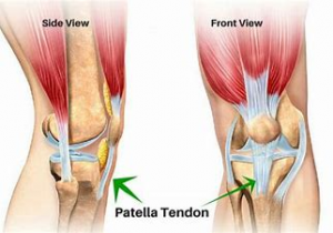 Patella Tendon